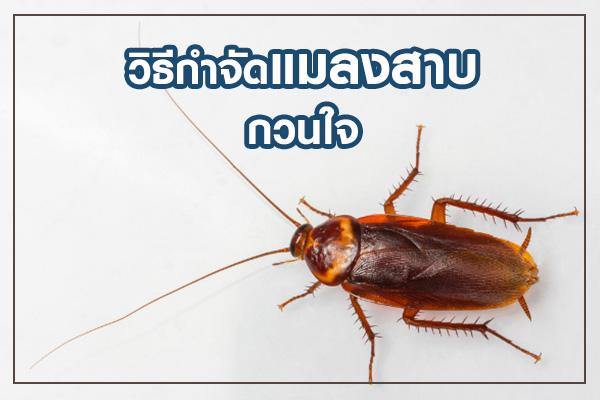 thaihome01_2